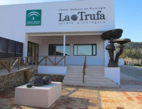 Creación de un Jardín Micologico – Junta de Andalucia (Cordoba)