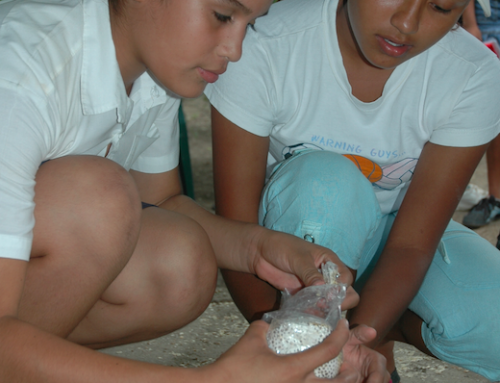 Rural Development by Growing Mushrooms in Nicaragua.