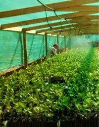proyecto 5 vivero trufas chile 1
