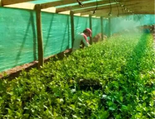 Transferencia tecnologica para vivero trufas – Chile