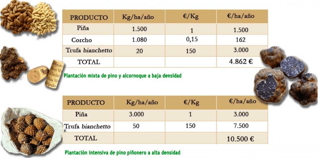 rendimientos de una plantación de trufa, piñón y corcho