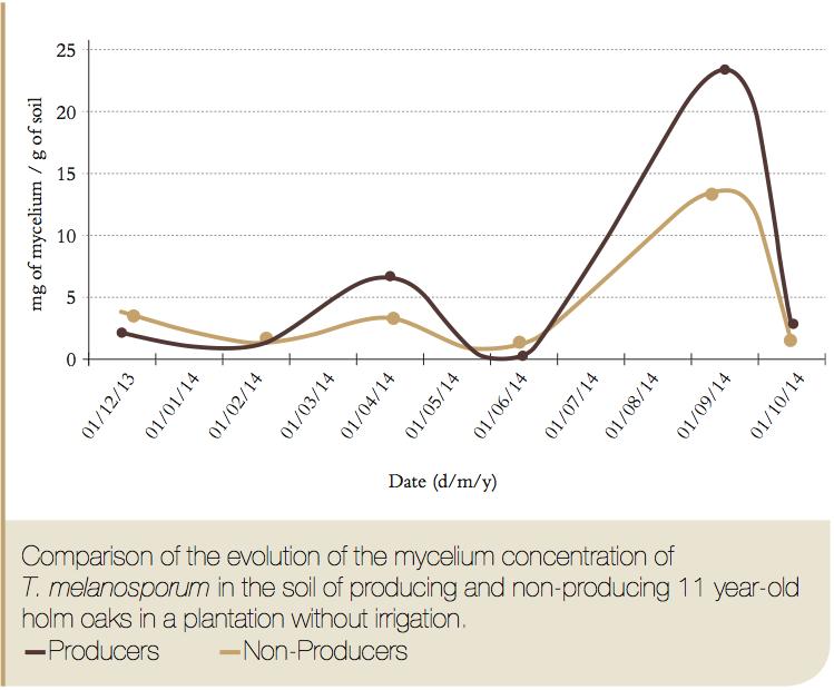 Cuantificación de Micelio de Tuber Melanosporum