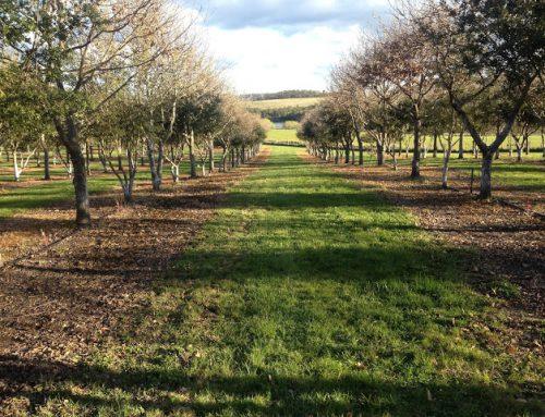 ¿Como ha ido la temporada de trufas en el hemisferio sur?