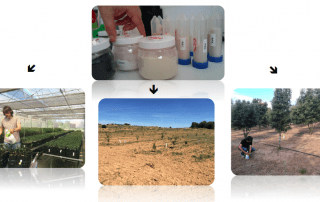 bacteria and truffle micofora research