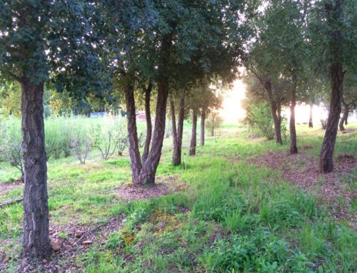 ¿Cómo decidir el marco de una plantación trufera en USA?