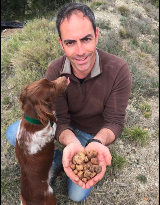 tuber borchii fructifica en España