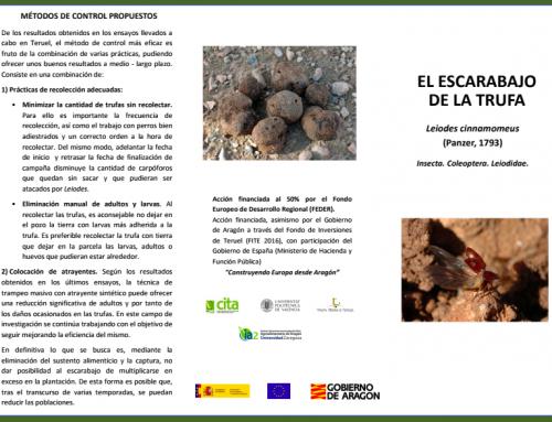 Nueva ficha técnica del escarabajo de la trufa Leiodes