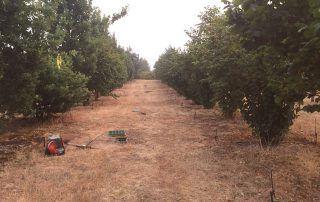 black truffle orchard in Oregon