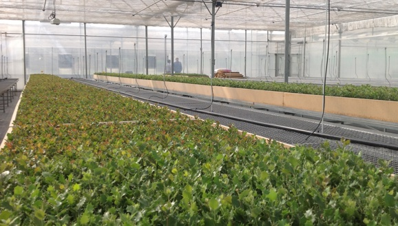 Production de plantes mycorhiziens