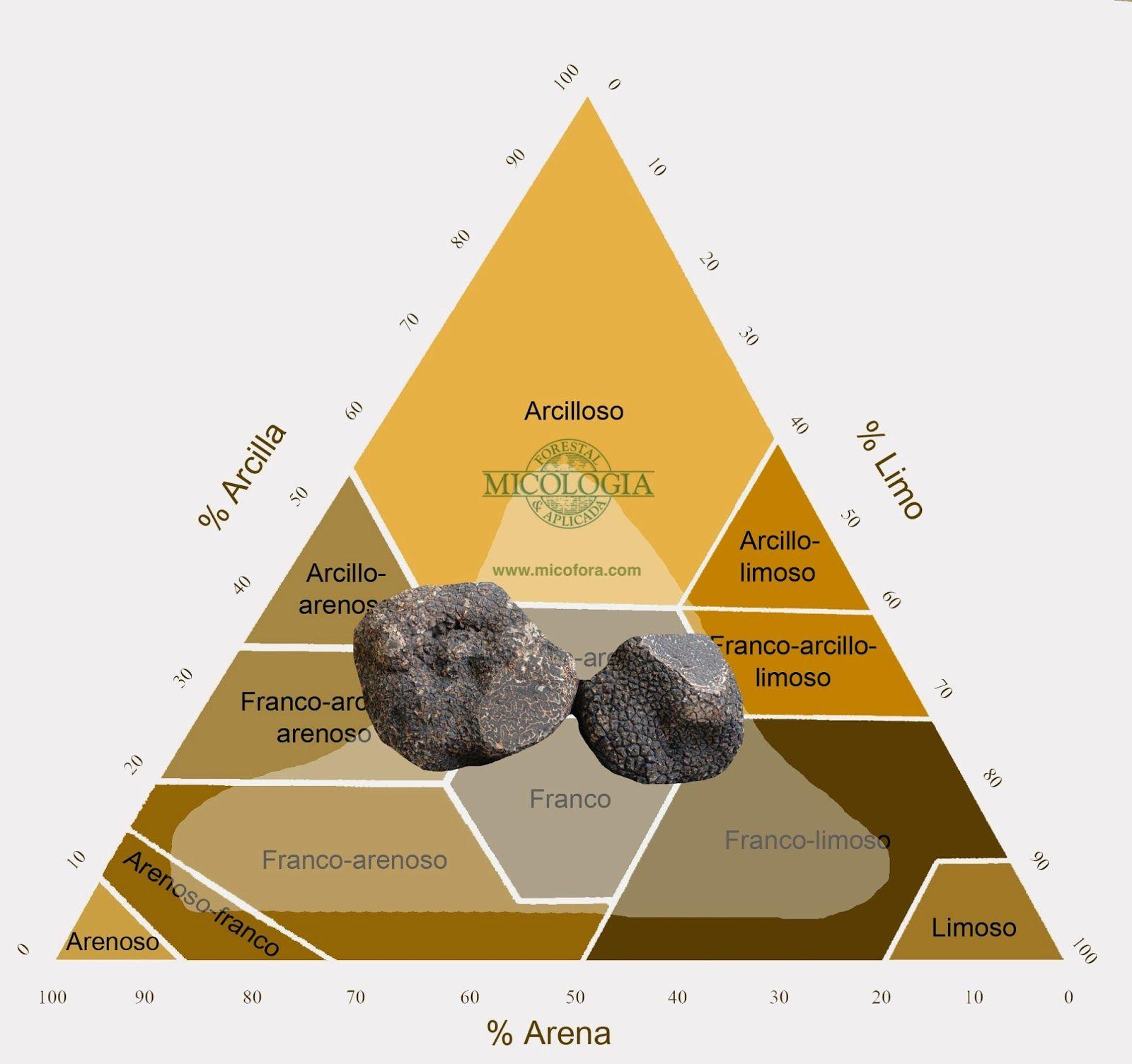 Como saber si la textura de un suelo es buena para trufas for Como saber si clausula suelo