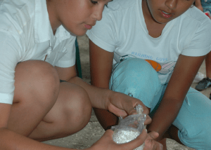 Cultivo De Setas Y Desarrollo Rural En Nicaragua.