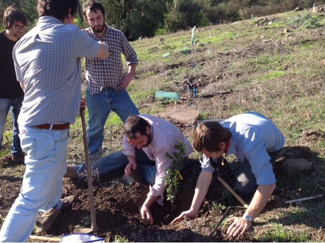 PROYECTO CORFO de seguimiento de plantaciones truferas en CHILE