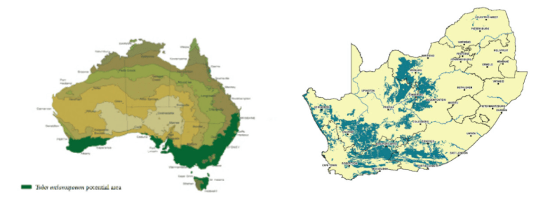 truffle-farming-potential-maps-australia-and-south-africa