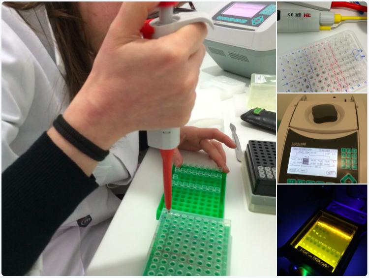 laboratorio de ADN de Micofora