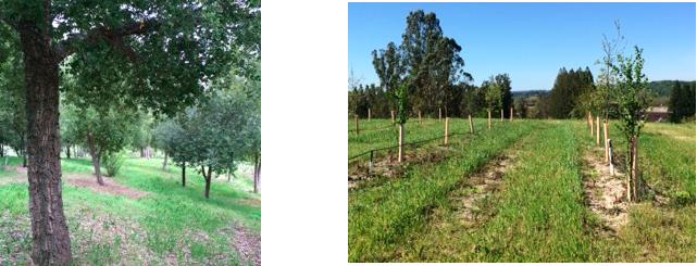 plantaciones-truferas-en-calidornia-micofora