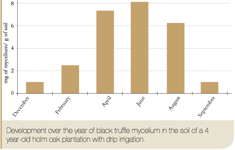 black truffle mycelium concentration in soil along the year