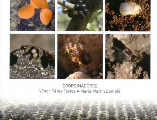 Nuevo libro: plagas y enfermedades en trufas y encinas truferas