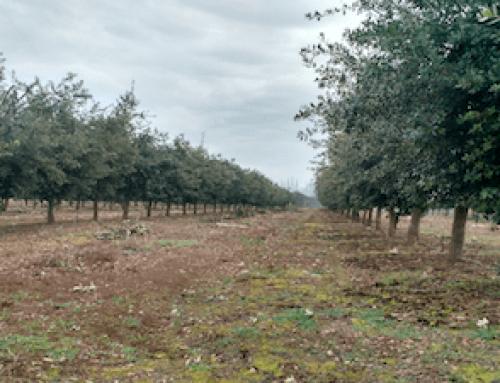 ¿Como ha ido la temporada 2018 de trufa negra en el Hemisferio Sur?