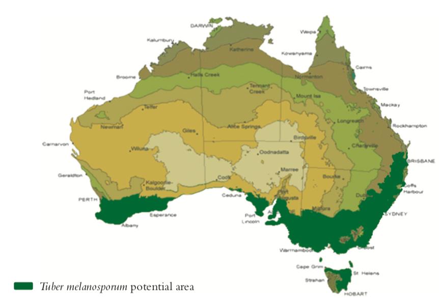 mapa cultivo trufas Australia micofora