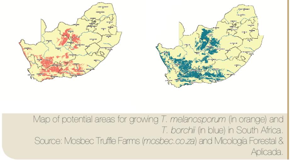 mapa truficultura Sudáfrica micofora