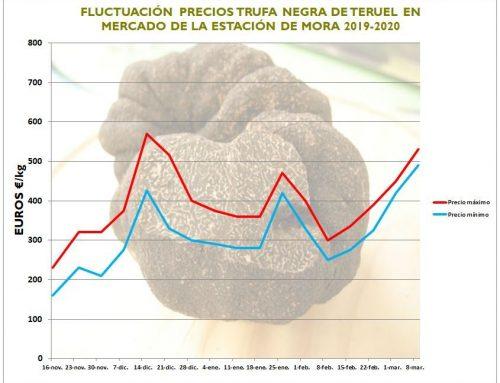 Precios y volúmenes de trufa negra en España y Francia temporada 2019-20