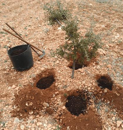 nidos de trufas micofora